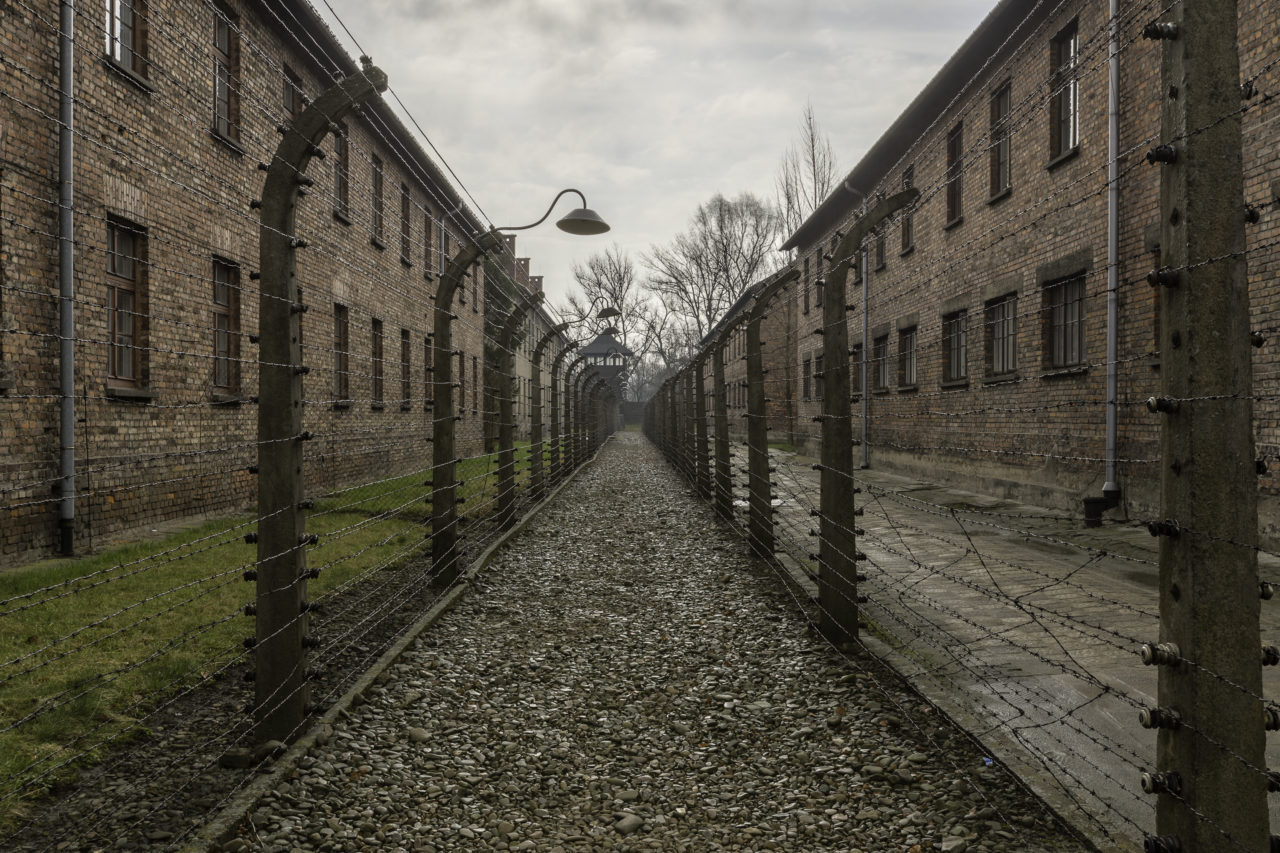 The Holocaust and genocides